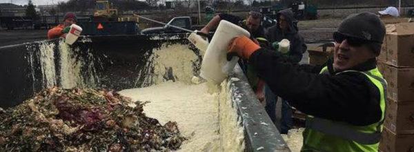 L'Università che ha trasformato 5000 litri di maionese avariata in energia